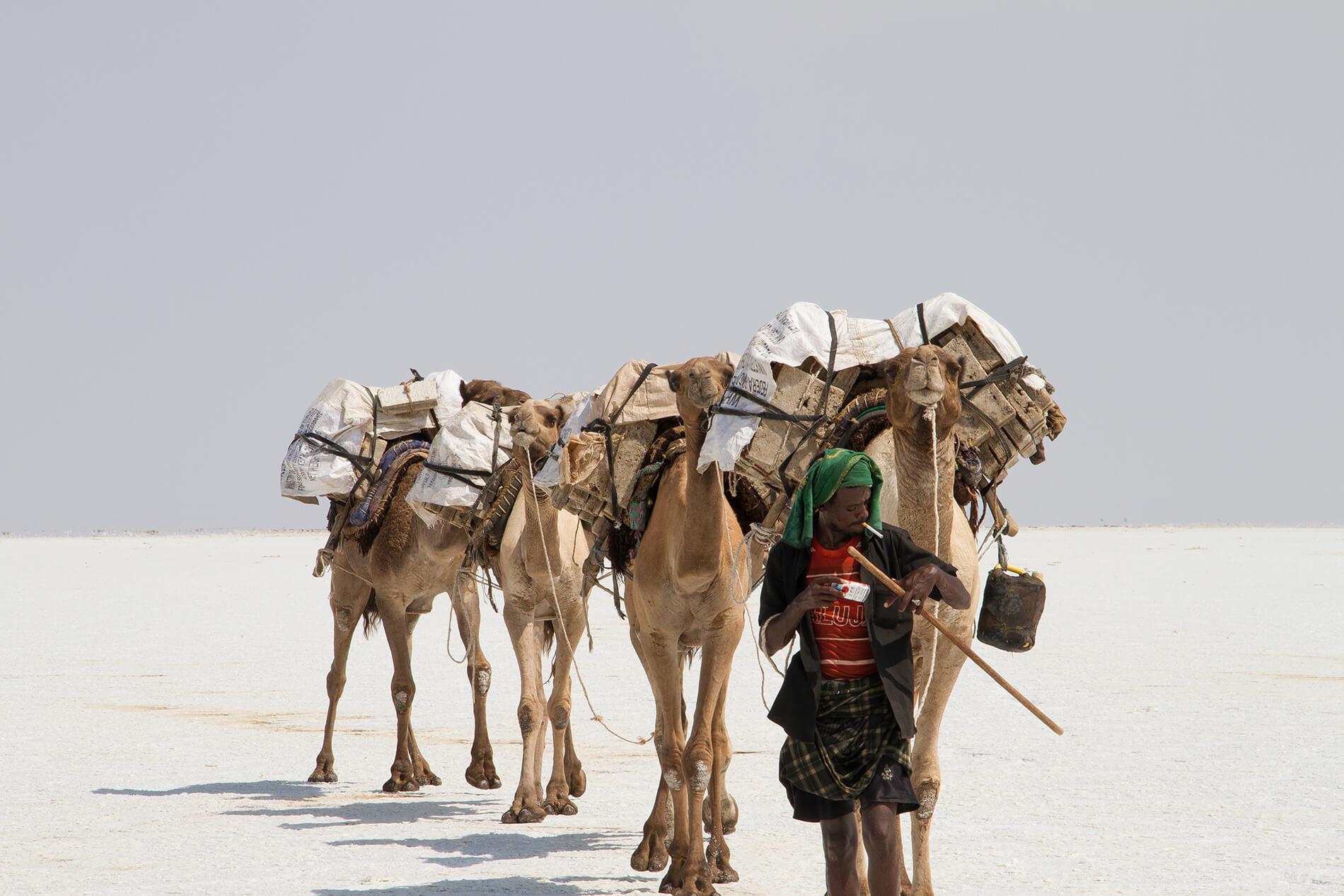 Salzarbeiter führt Kamele