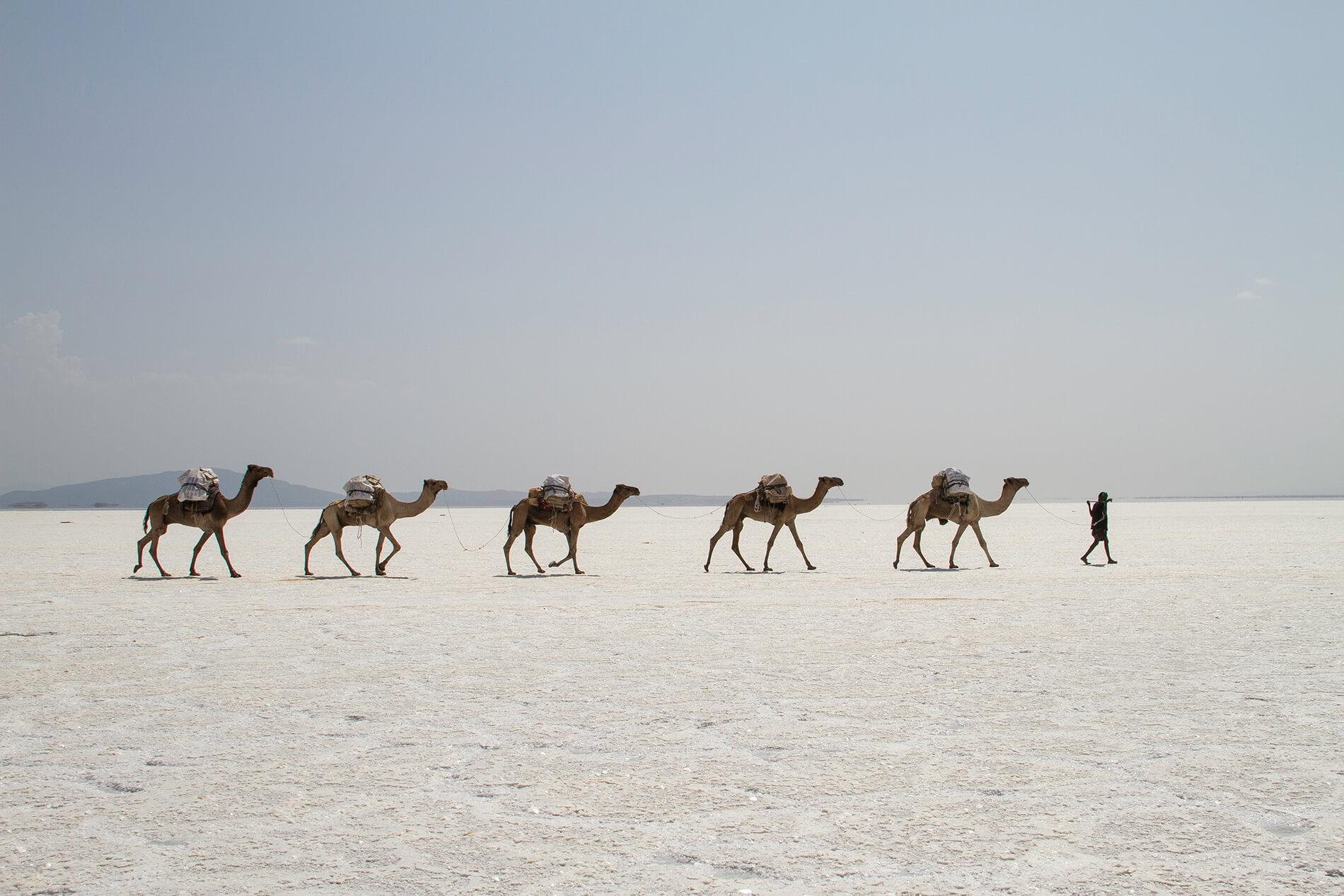 Salzarbeiter mit Kamelen