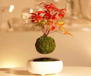 Biology Teacher Student PhD Gift Air Bonsai Tree Magnet