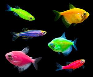 Glow In The Dark Fish