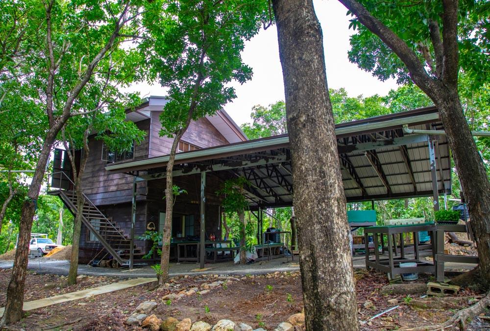 Chien Bois Camp
