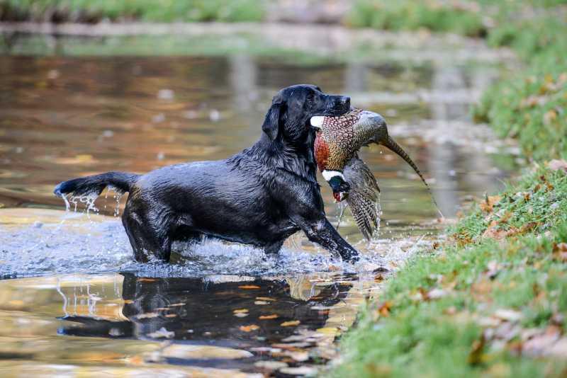 duck shooting season