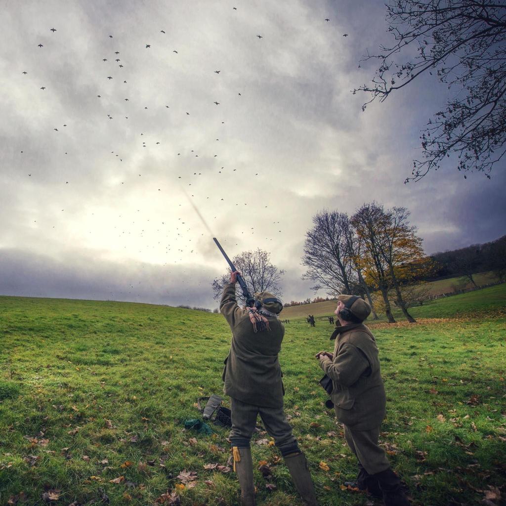 partridge shooting season