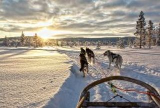 Siberian husky tour