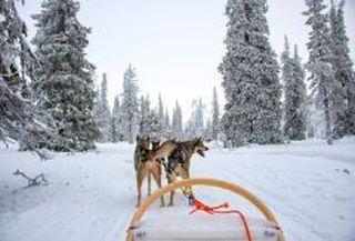Husky & reindeer combo tour!