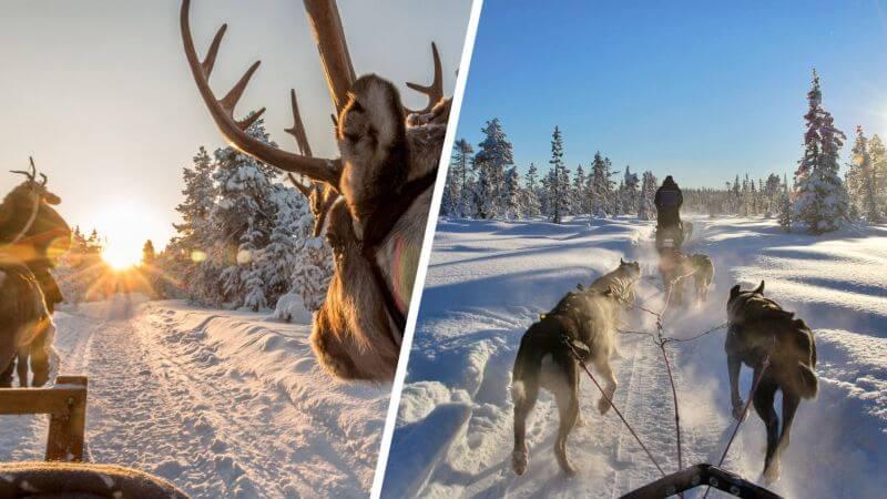 Arctic Animals Safari