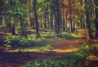 Lappish Forest