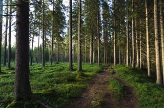 Easy hiking trail in 1 hours from Rovaniemi
