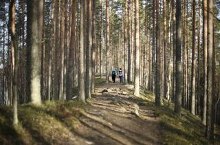 Arctic forest trail