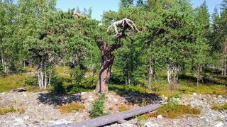 Summer in Lapland