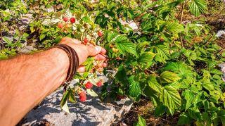 Raspberry in Lapland