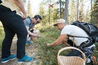Wild berries in Rovaniemi