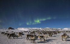 Aurora Borealis by Reindeer sleigh