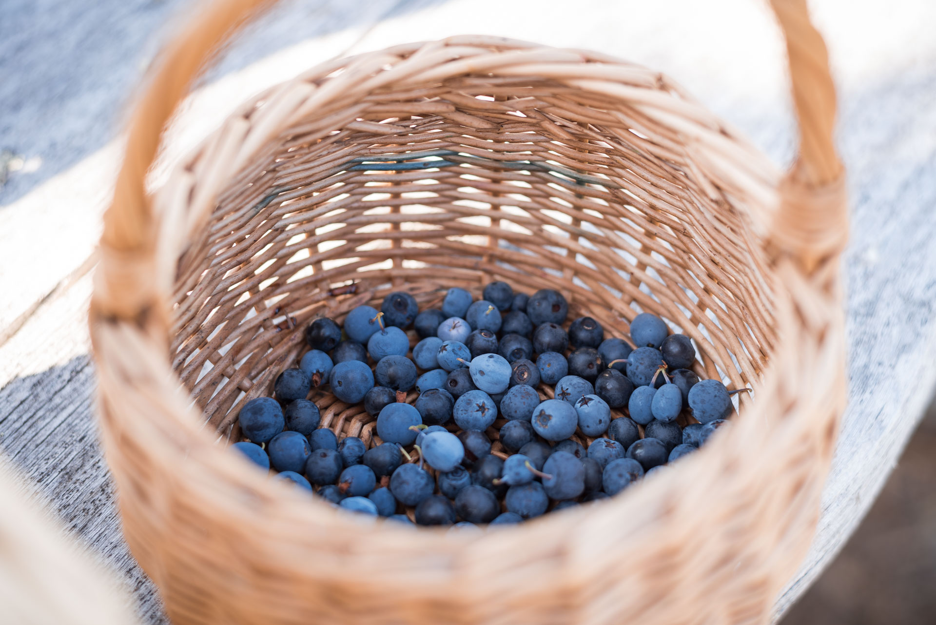 Bilberry picking, august 2018