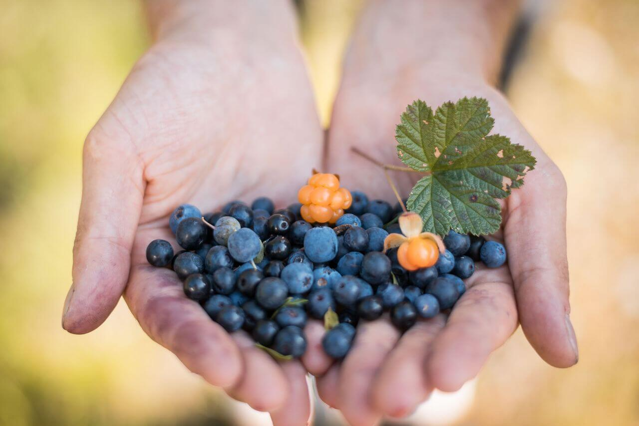 Lapland is the world's largest contiguous area for picking organic berries and mushrooms!