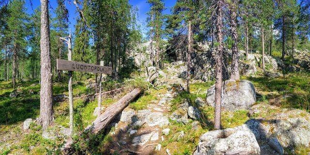 Nature trail, soooo beautiful at summer