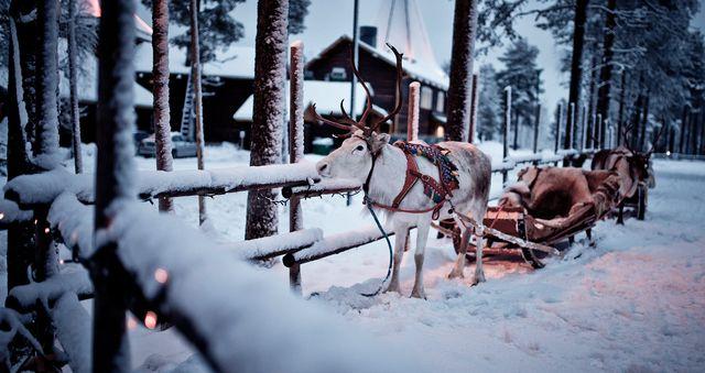 Santa's Village and Arctic animals adventure