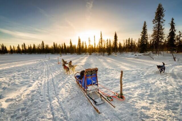 Arctic animals combo safari, husky + reindeers