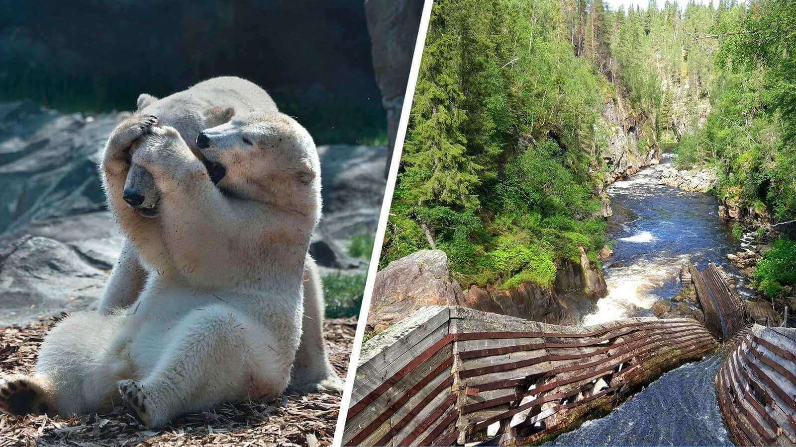 Get ready for a full day adventure in Finland's magical nature.