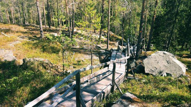 Ranua wildlife park and Auttiköngäs hiking full day tour