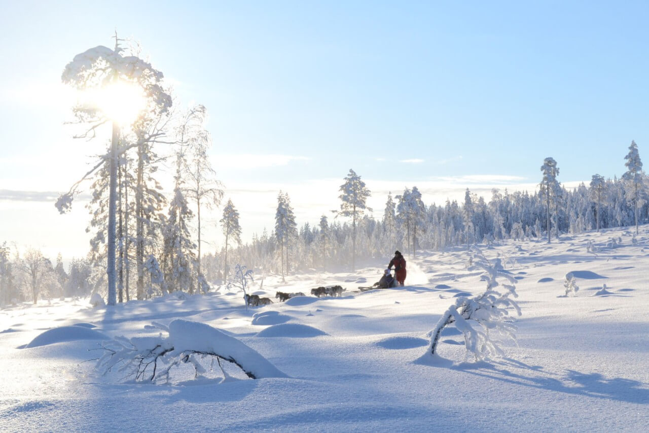 Get away from the city and enjoy the magical forests of the Lappish wilderness.