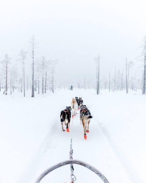 Self drive husky safari in Rovaniemi, 10km