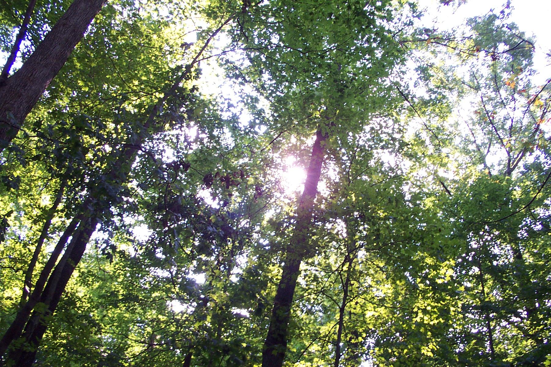serene treescape