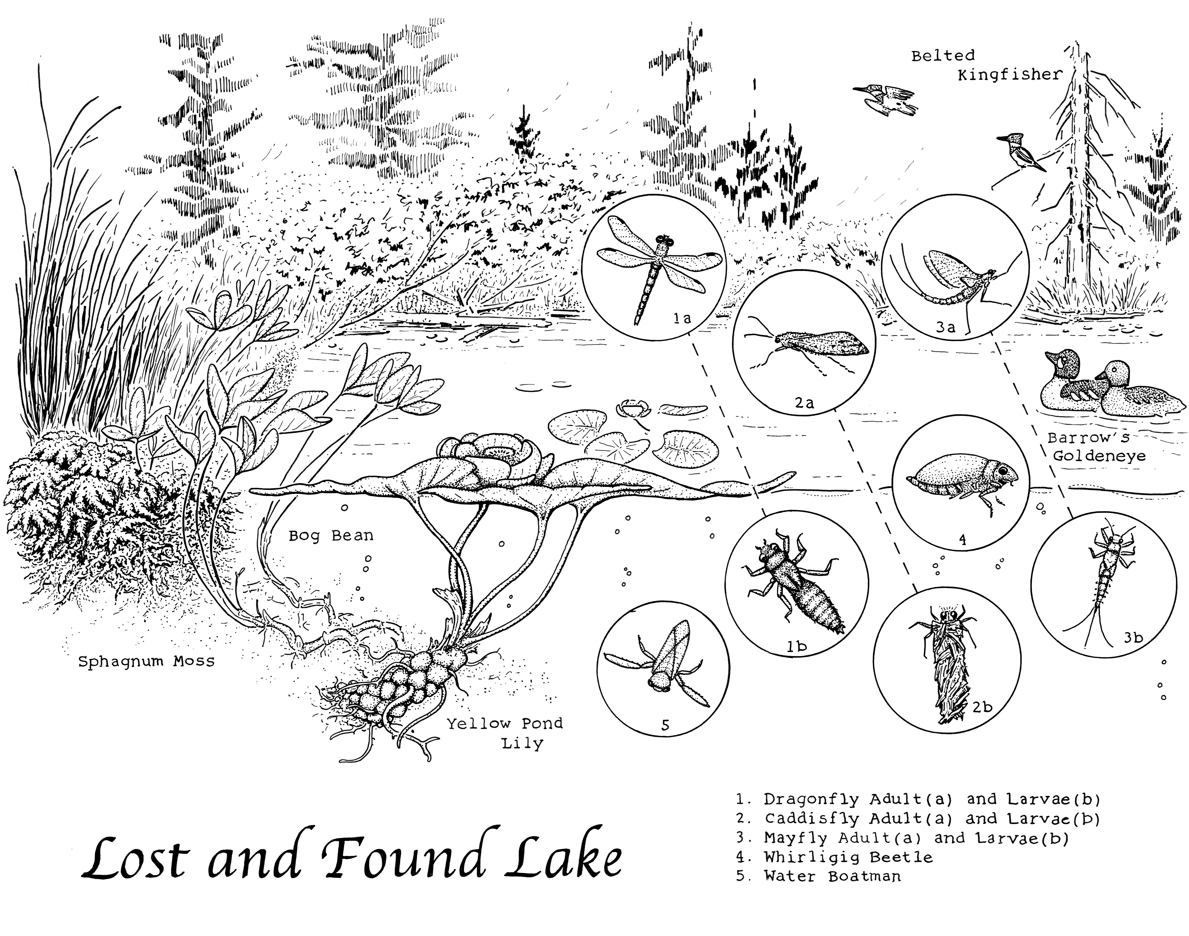 Lost and Found Lake drawing