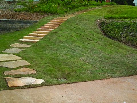 Lawn Sod