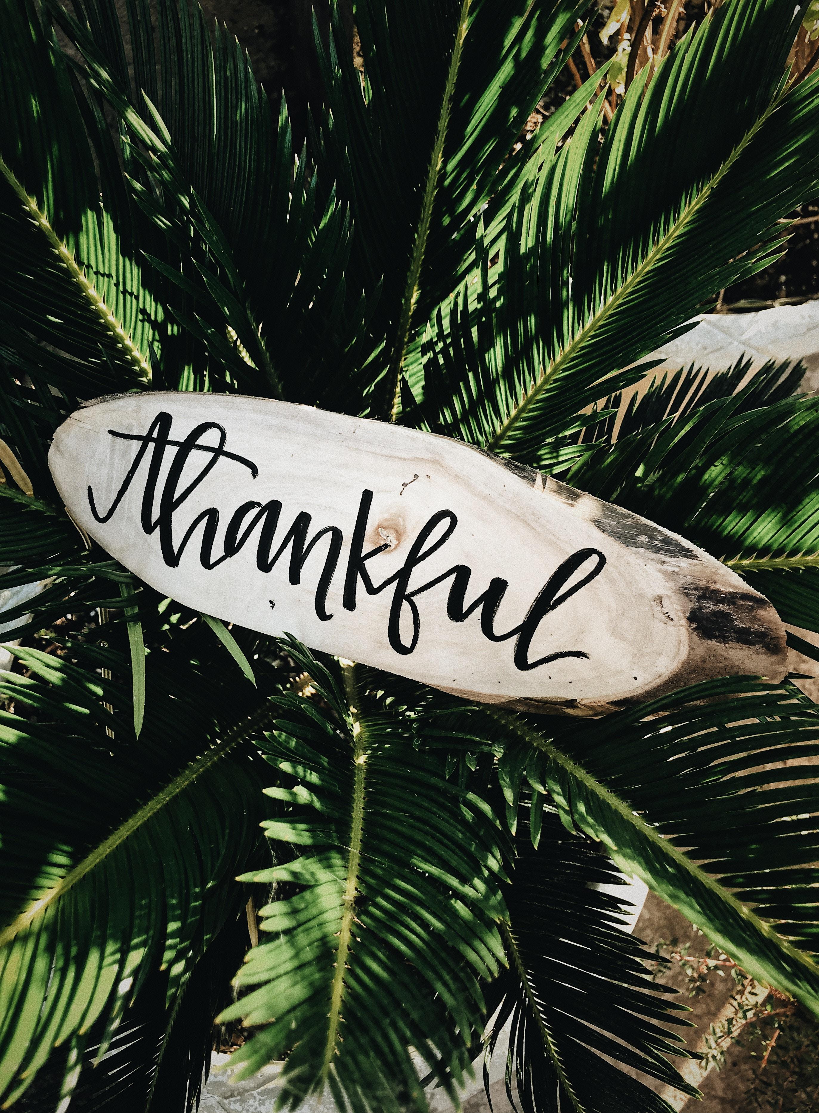 Dr Hazel Harrison: a letter of gratitude