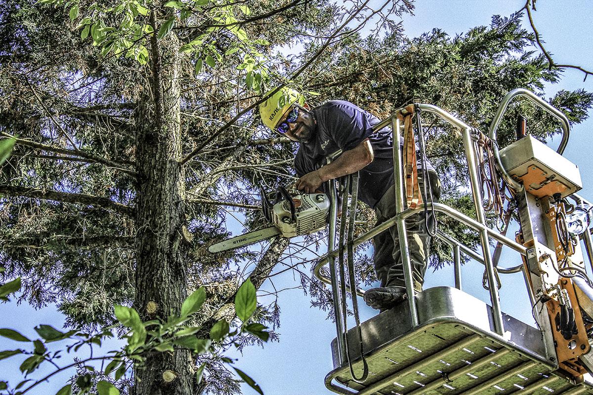 Photo of tree lift