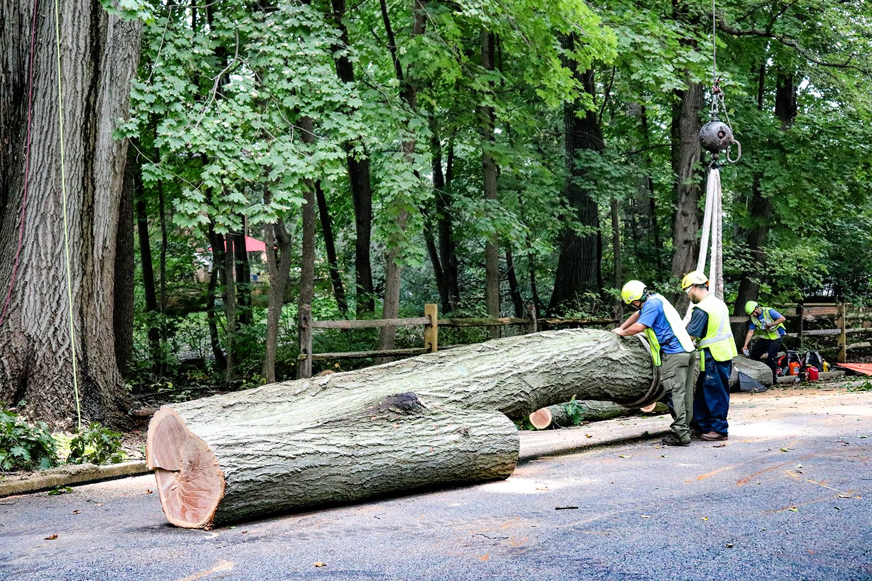 tree removal West Chester
