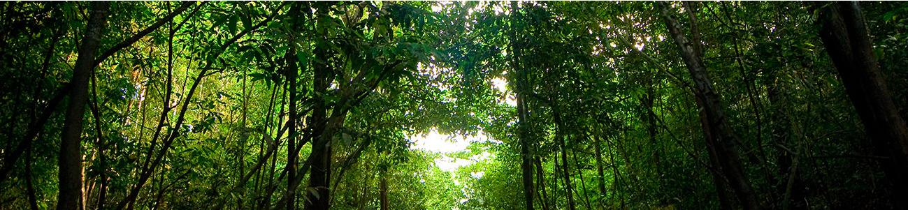 TV   Amazônia Sociedade Anônima