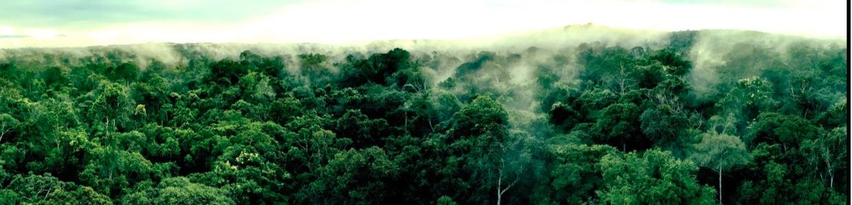 Reconexão Amazônia | o que eu aprendi com a floresta