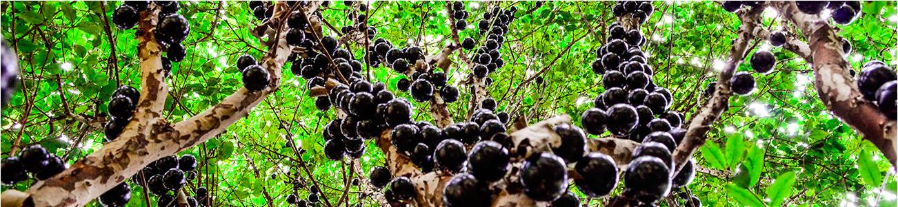 No dia da árvore Regina Casé lança campanha: vamos reflorestar o Brasil?
