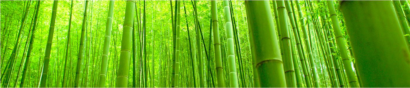 A cultura do bambu pode ser a solução pro desmatamento