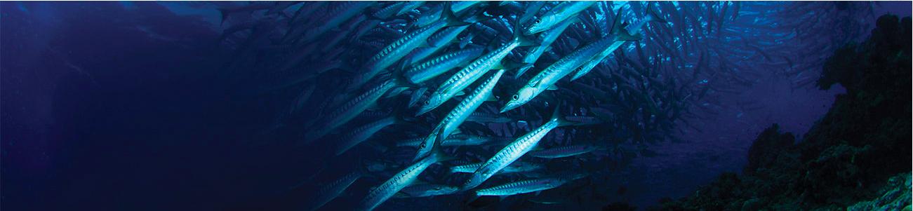 Oceanos poderão ter mais plástico do que peixe em 2050