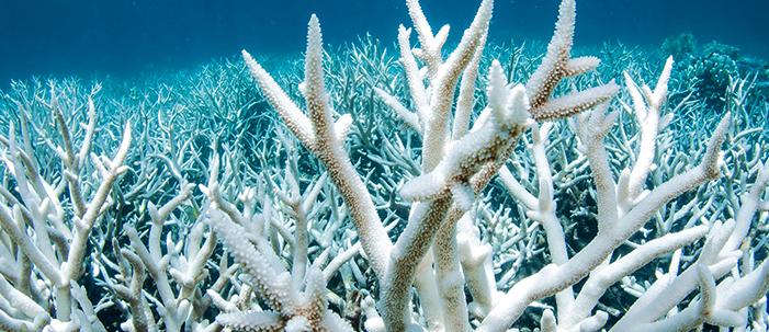 A proteção solar que mata os corais