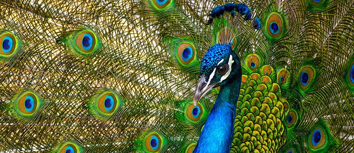 O Carnaval que tortura animais pela beleza