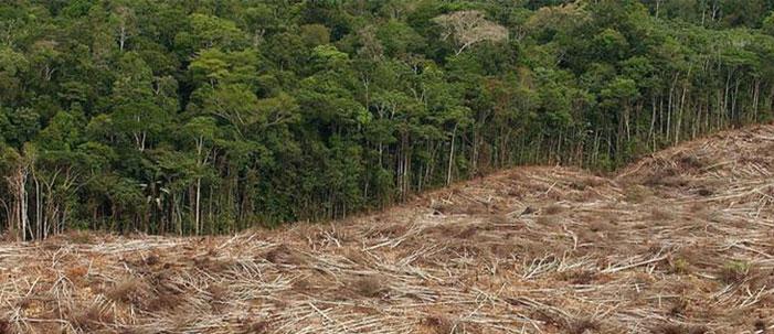Desmatamento: a história da Amazônia