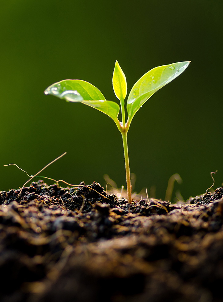 A small plant seedling growing out of soil