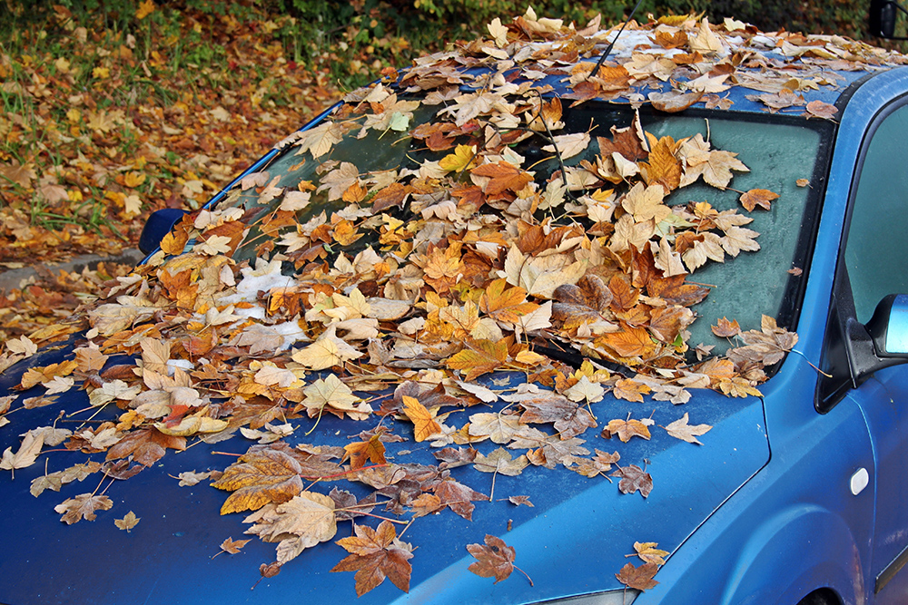 Fallen leafs on a long-time abandoned car