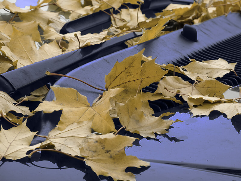 Fallen leafs on wipers and hood of a car