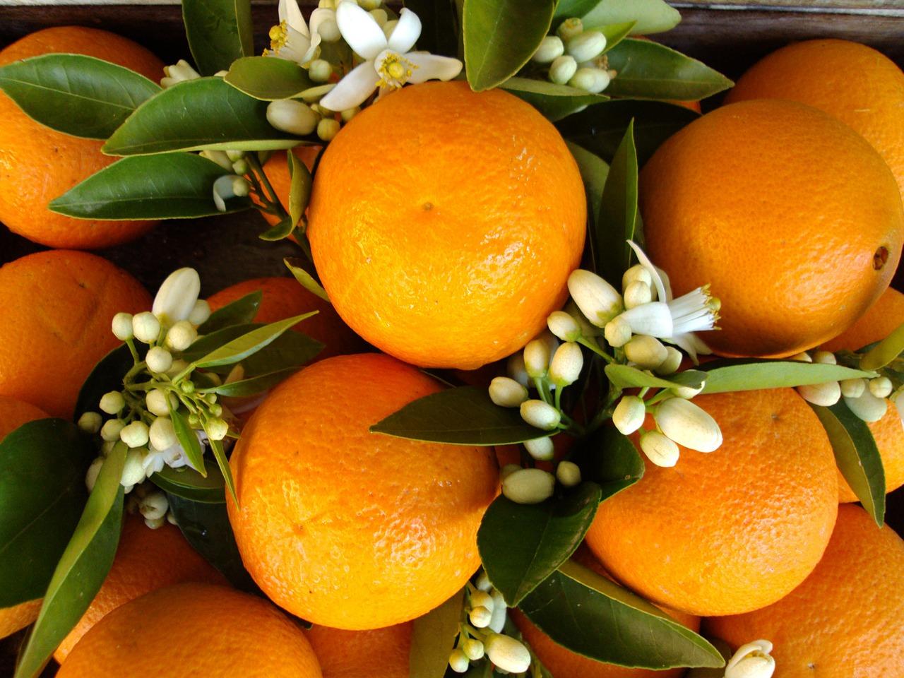 Wild Orange Essential Oil: oranges