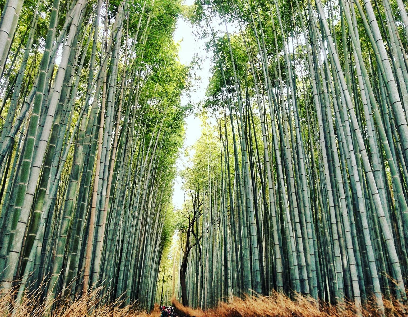 Bamboo Toothbrush: bamboo stalks