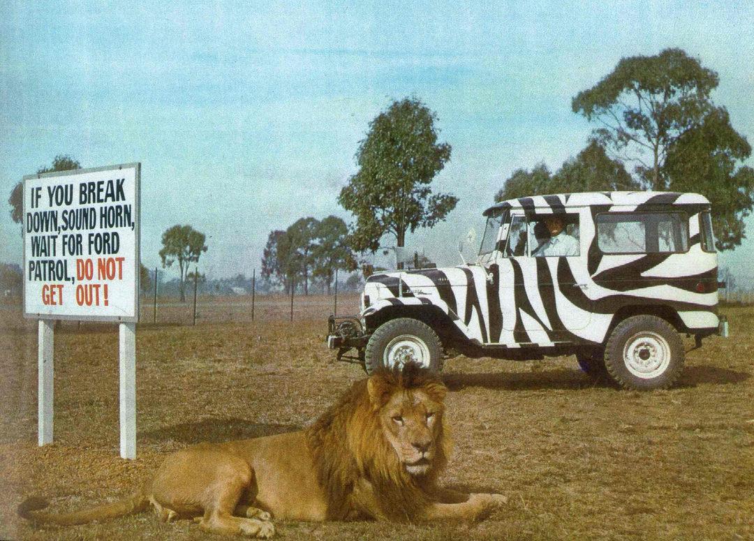 Warning sign near a lion at Bullens safari park near Yatala, Queensland