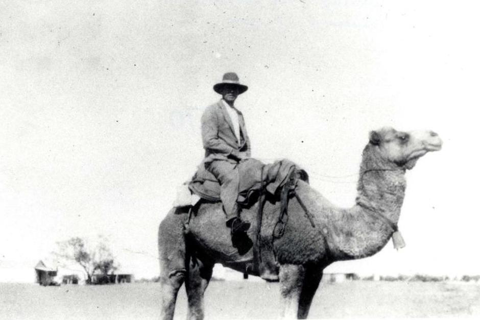 Police camel