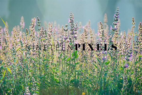 Nature Photo collection by nineteenpixels