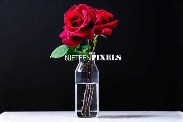 Roses stock Photo collection by nineteenpixels