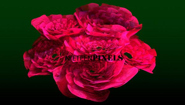 3d roses disign by nineteenpixels